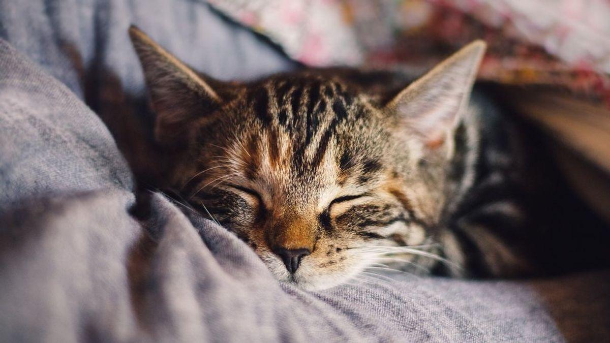 La nueva variante del coronavirus podría provocar problemas cardíacos en gatos y perros