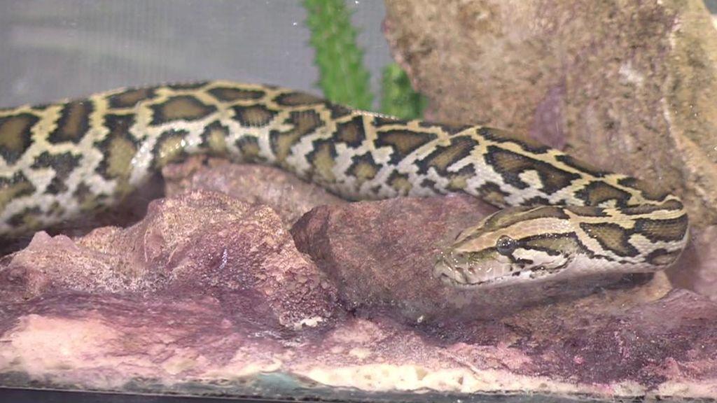 Miedo a las serpientes