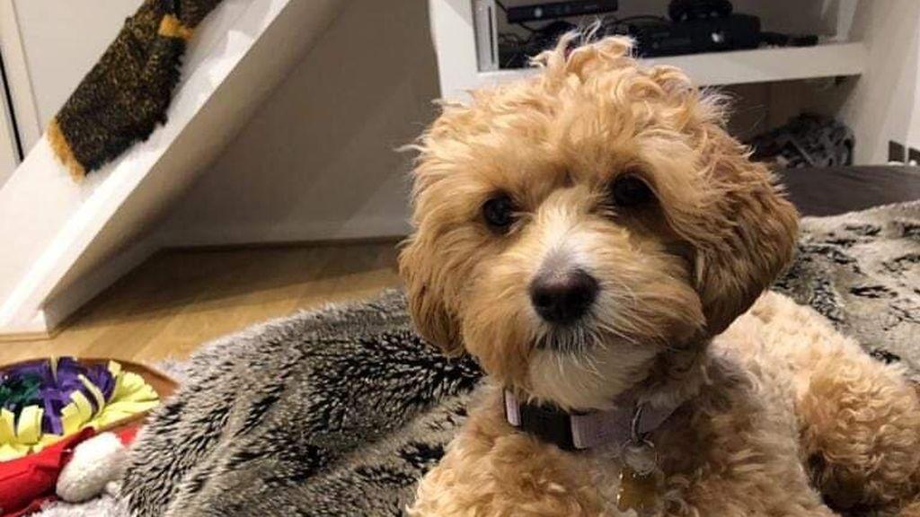 El emotivo reencuentro de Nala y su dueña: una perrita que fue robada mientras la sacaban a pasear