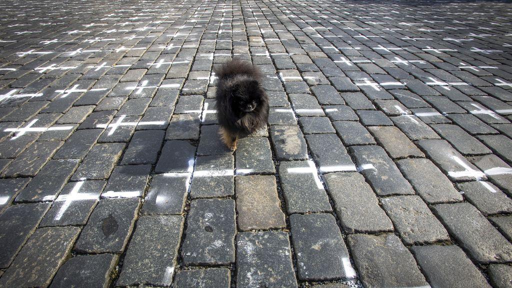 EuropaPress_3615711_22_march_2021_czech_republic_prague_dog_walks_along_the_slabs_lining