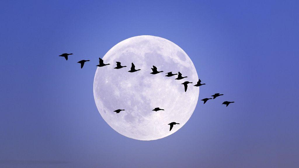 Se acerca la deslumbrante luna llena 'de gusano', el primer plenilunio de la primavera