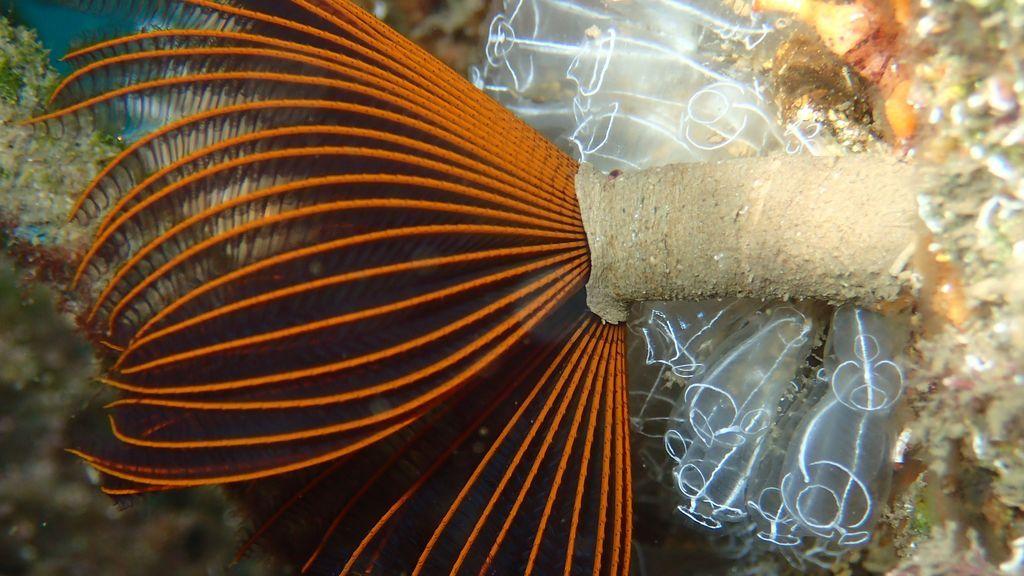 Una especie invasora localizada en un puerto deportivo andaluz