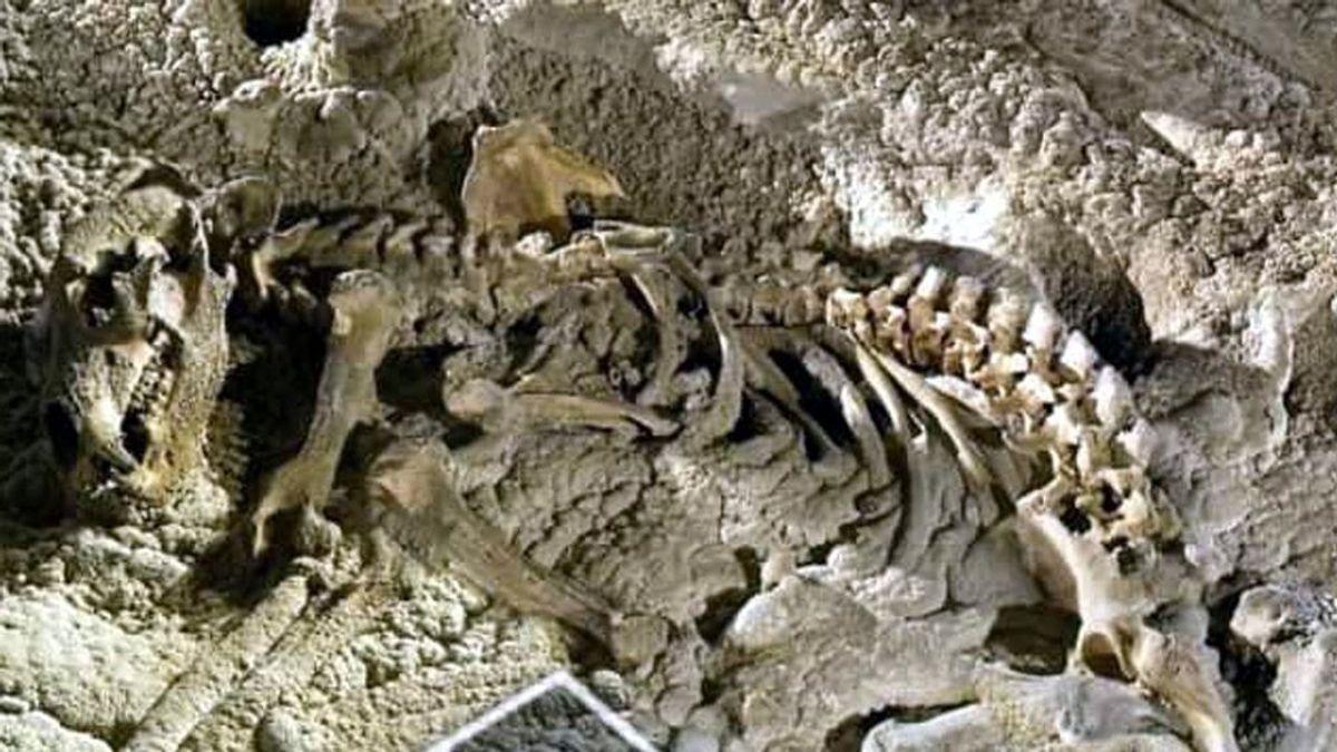 Investigan expolio de restos fósiles de osos cavernarios en cuevas cántabras