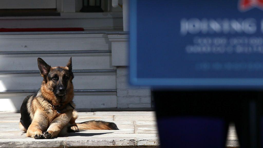 Los perros de Joe Biden vuelven a la Casa Blanca tras pasar una temporada por un adiestramiento