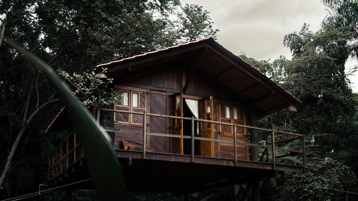 Una casa en un árbol por y para la naturaleza