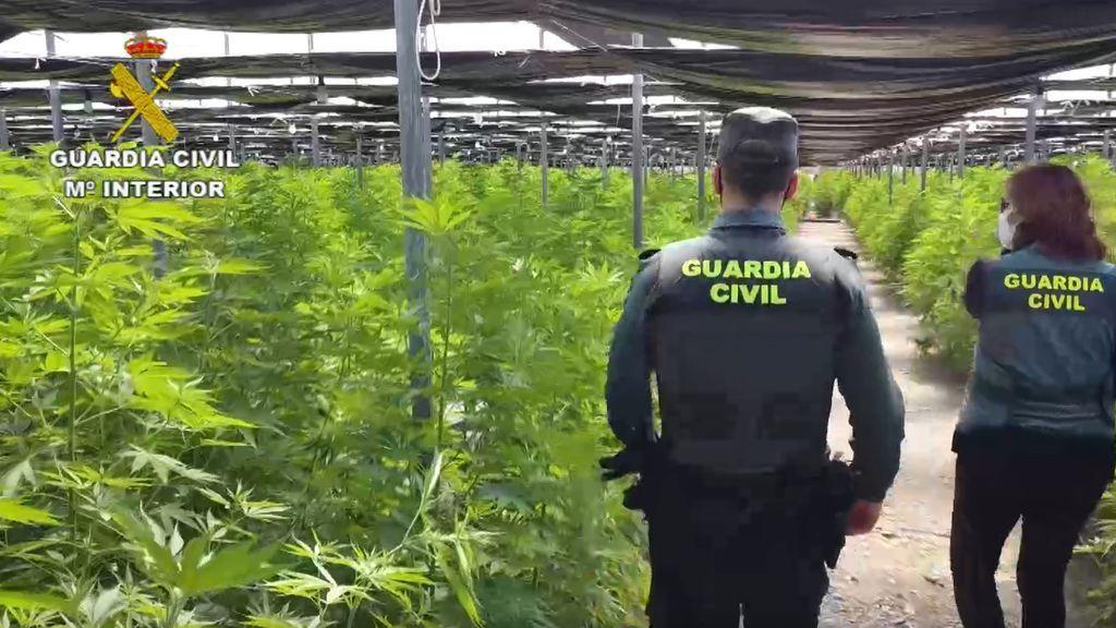 Golpe al imperio de la marihuana en Almería
