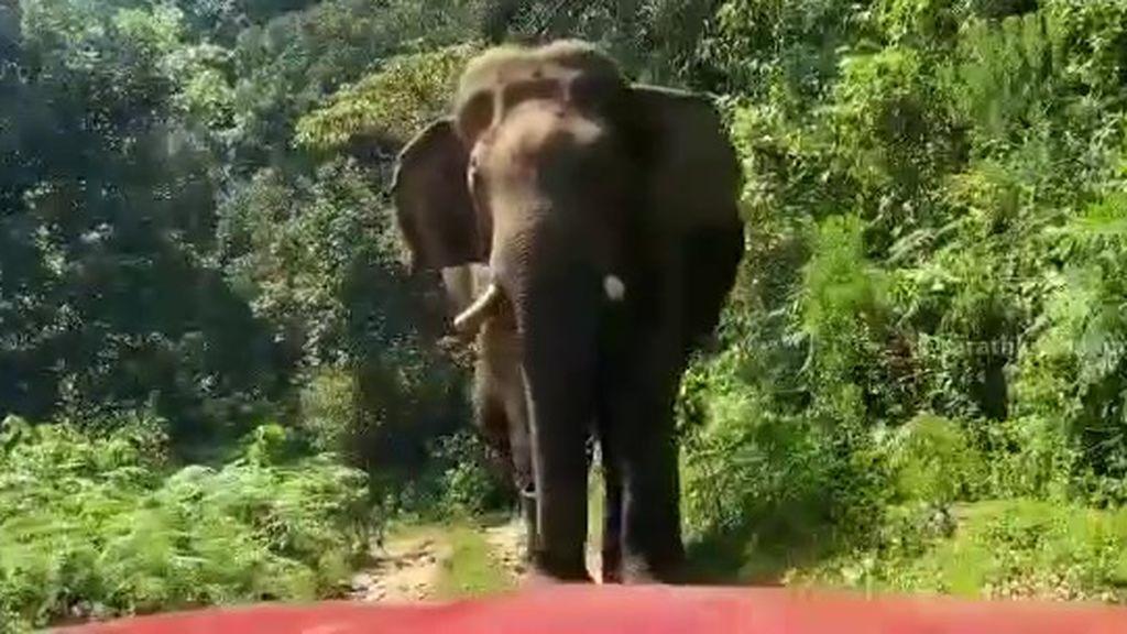 El espeluznante momento en que un elefante persigue a un grupo de turistas en Sri Lanka