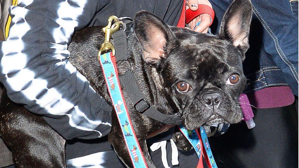 Ryan Fischer, el paseador de perros de Lady Gaga, sale del hospital un mes después del tiroteo