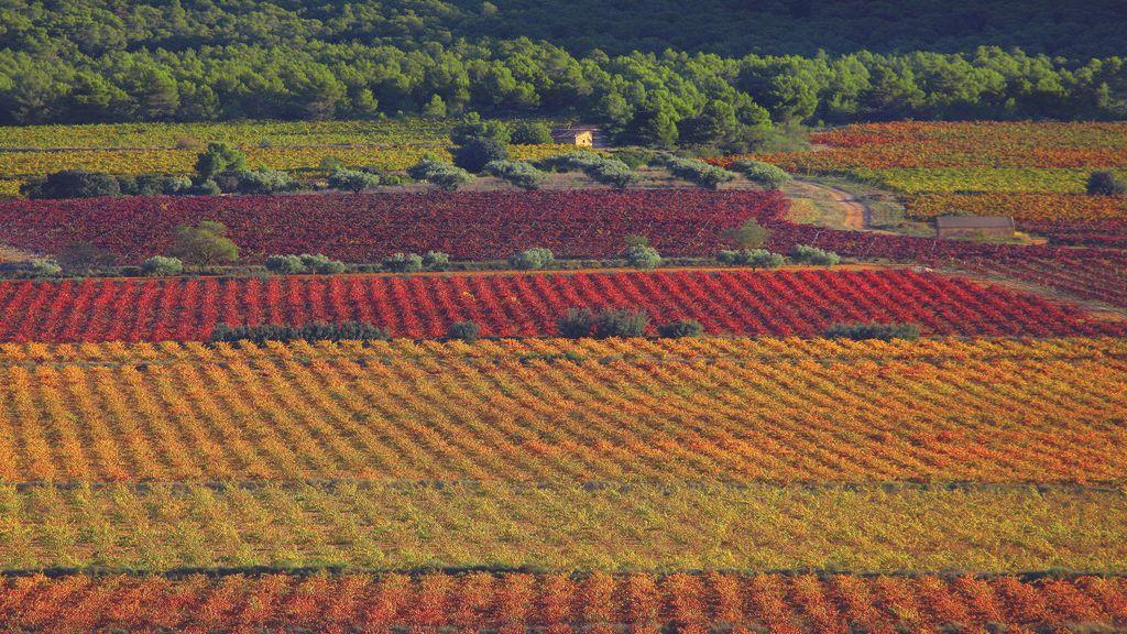 Campos de viñedos de la Toscana valenciana