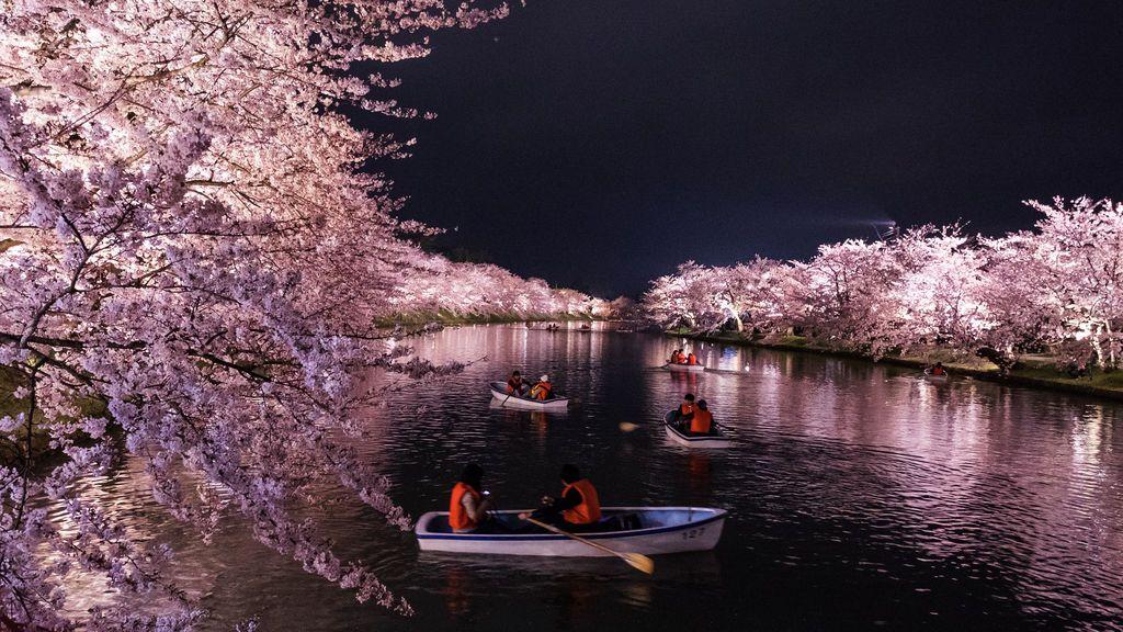 Japón celebra la floración de la 'sakura', emblema del samurái