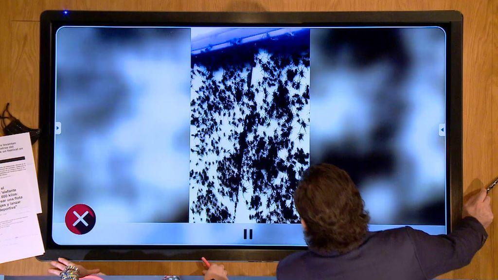 Iker Jiménez retira la mirada asqueado al ver millones de arañas