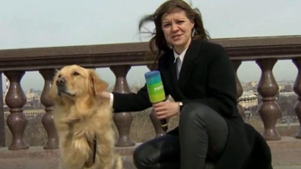 Un perro roba el micrófono a una reportera que estaba en pleno directo