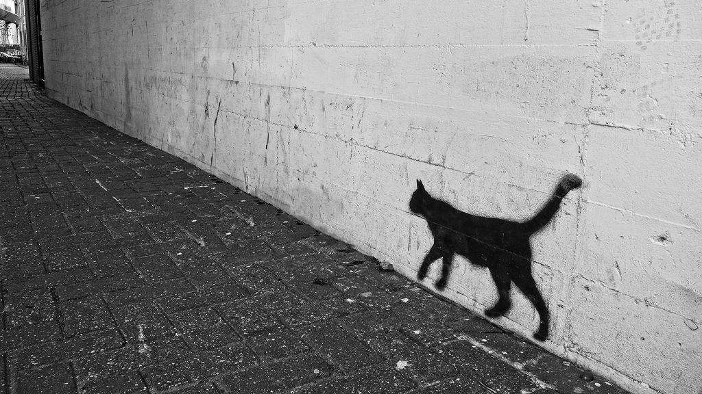 Es tan raro que podría no ser un gato: algunos dicen que podría ser un animal mitológico
