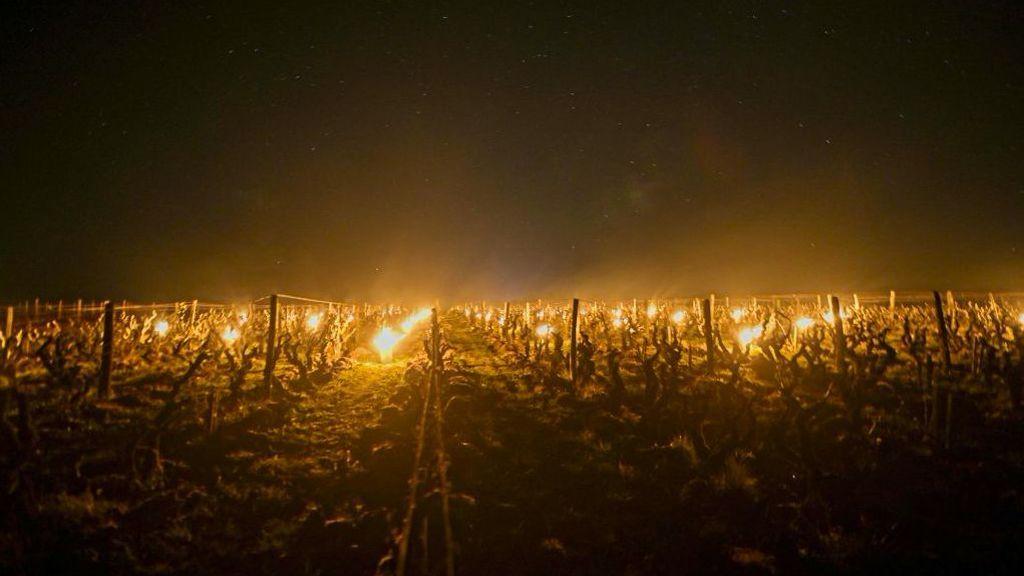 ¿Por qué están provocan estos incendios en los cultivos los agricultores franceses?