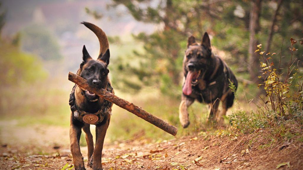 Fin a la lista de perros peligrosos: prevalecerá el comportamiento y no la raza