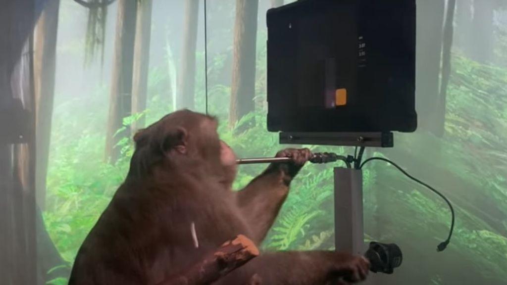 Un macaco con un chip de Neuralink juega al ordenador a cambio de un plátano
