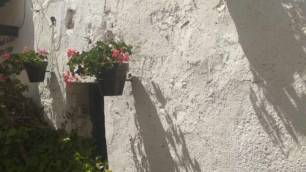 La pared encalada y los geranios