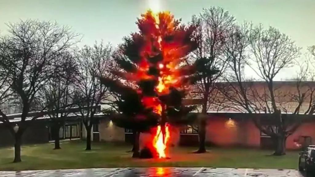 Momento de película en que un rayo derrumba en segundos un árbol en Estados Unidos