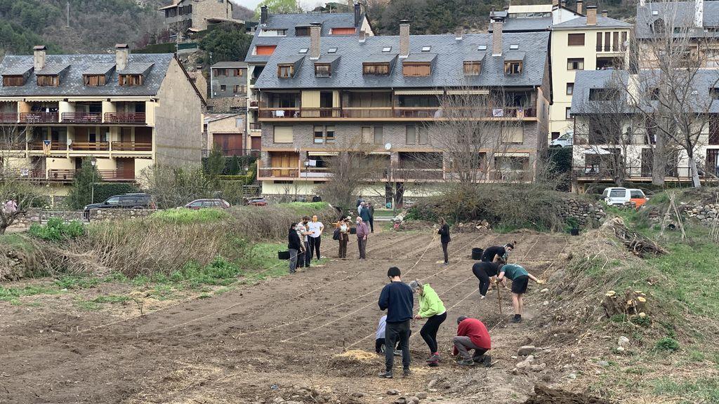 Voluntarios trabajando en la huerta