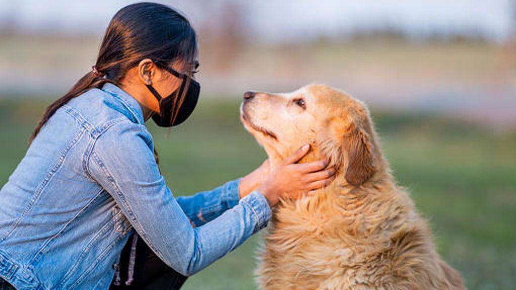 Los perros son capaces de detectar positivos de covid con una precisión del 96%, según un estudio