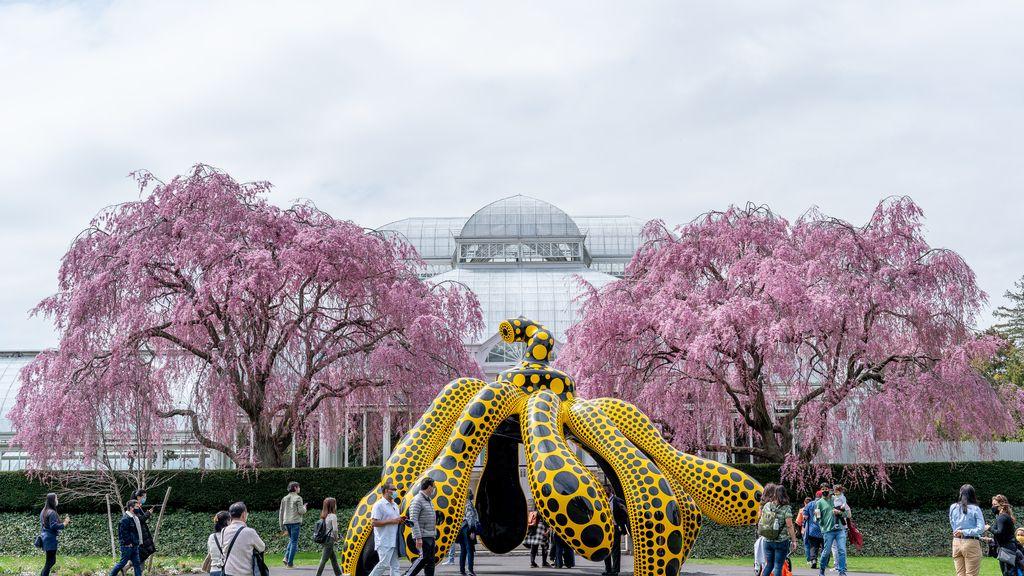 Lo mejor de la muestra de Kusama en Botánico de Nueva York