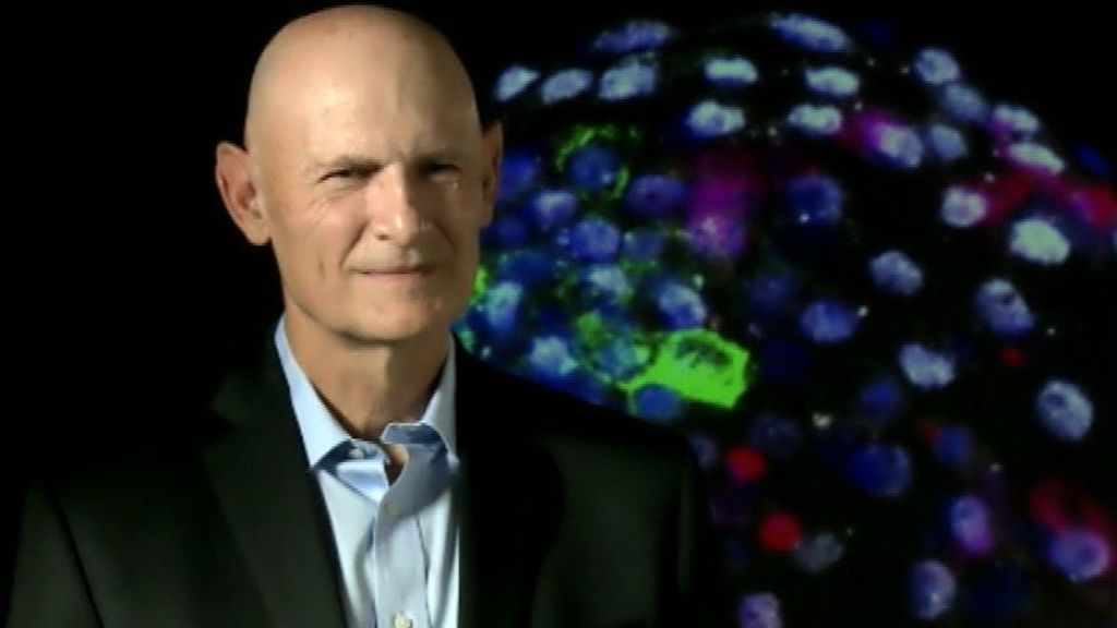 """Izpisua: """"Crear embriones de células de mono y humano ayudará a generar órganos para ser trasplantados a personas"""""""