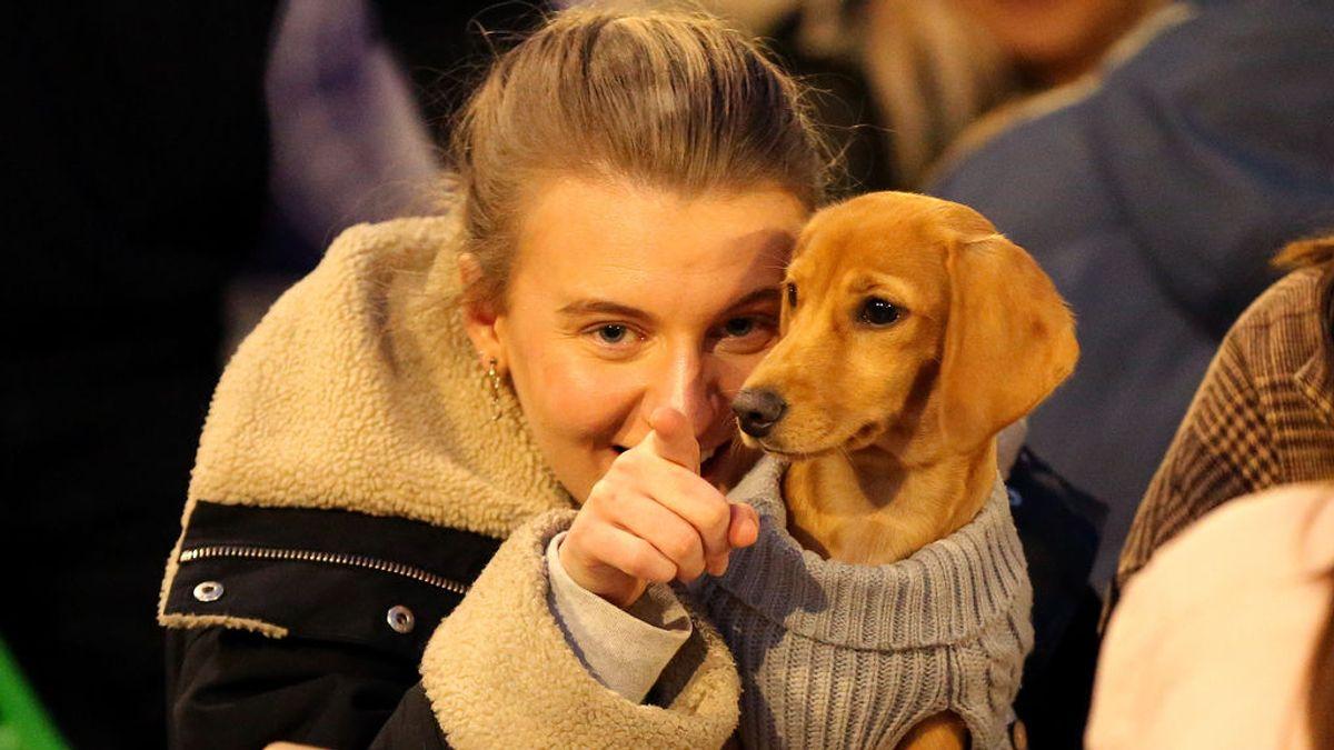 Investigadores chinos apuntan a los perros como origen de la variante británica