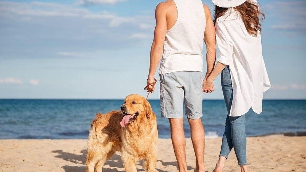 ¿Quién se queda con la mascota? Custodia compartida para los animales en casos de separación o divorcio