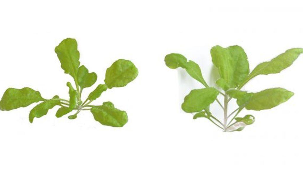 Un estudio descubre por qué no todas las plantas crecen lo mismo aunque sean similares