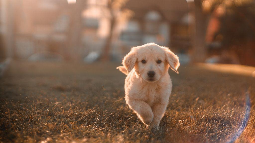 Perros, gatos y personas con el corazón dividido. ¿Se puede querer más a un animal que a una persona?