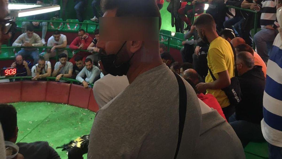 Desmantelada una pelea de gallos en Cádiz con 130 participantes sin medidas anti-covid