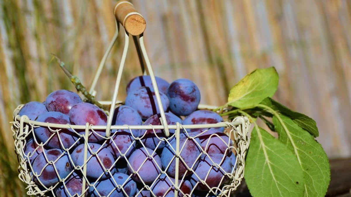 Ciruela, beneficios y propiedades de la fruta de la temporada