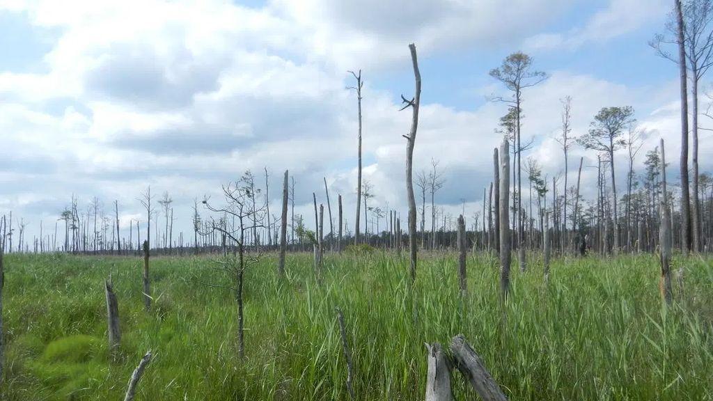Los bosques 'fantasma', la nueva víctima del cambio climático: así se crean