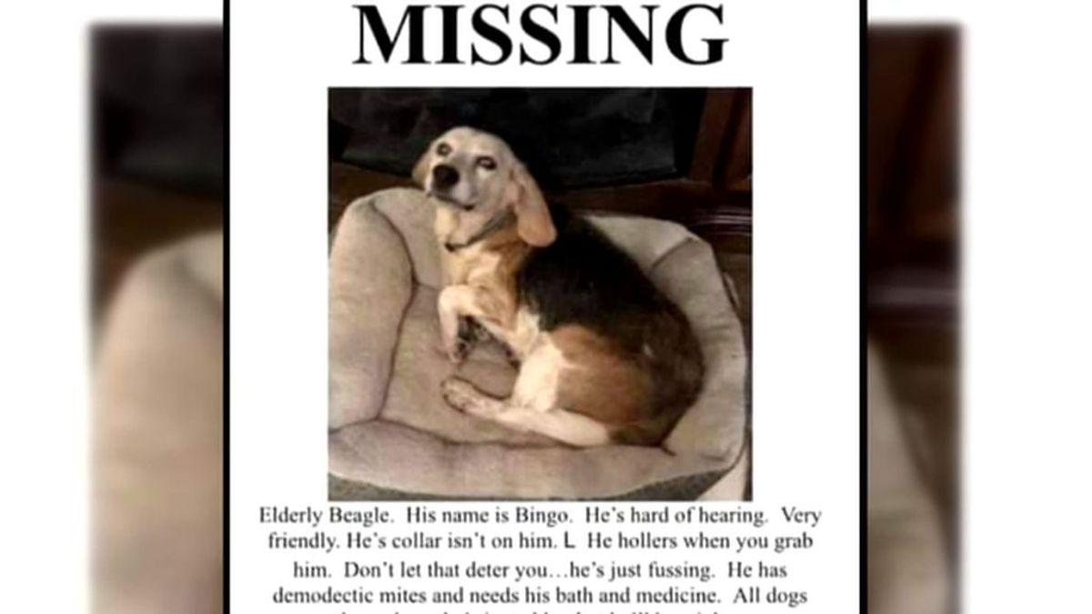 Bingo, el perro que vuelve a casa 14 meses después