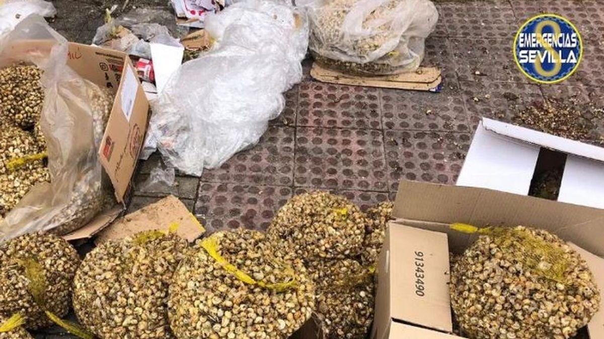Recogían caracoles en mal estado de un contenedor para venderlos ilegalmente en Sevilla