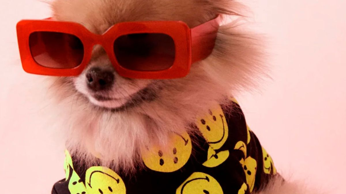 Zara lanza su colección 'Smiley' para mascotas y personas