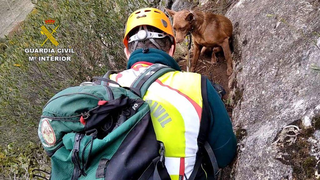 Rescate de una perra atrapada en la pared vertical de la Foz de Lumbier en Navarra