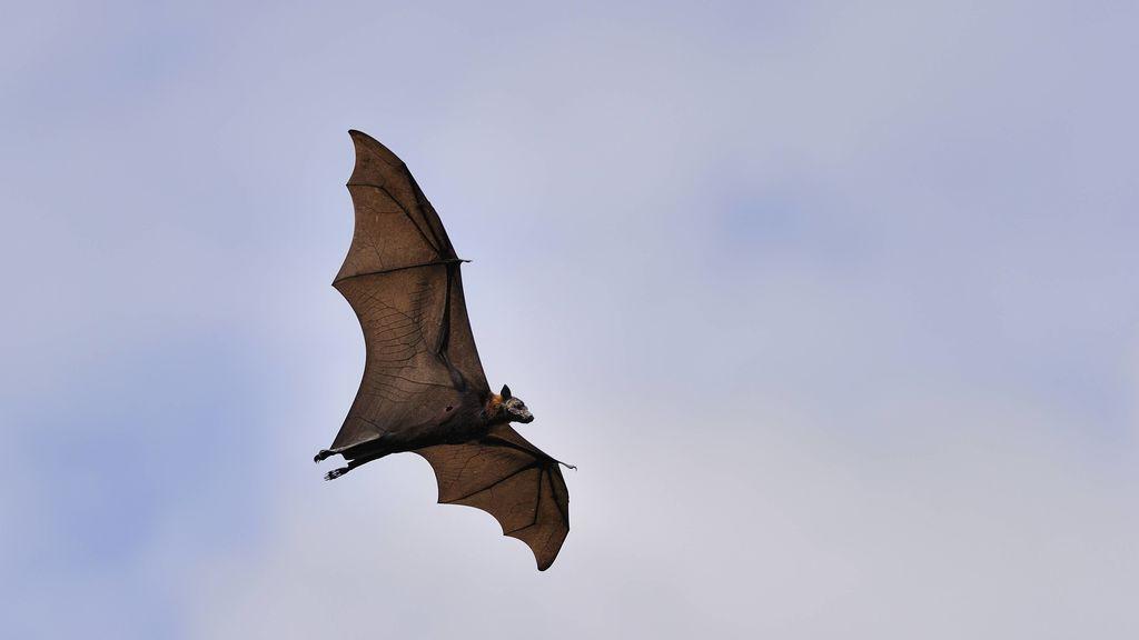 Detectado un 'sexto sentido' en algunos mamíferos que los permite orientarse durante la migración