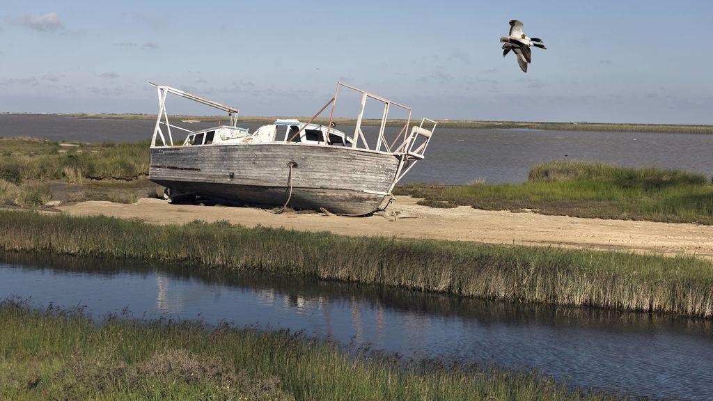 ¿Qué es el camalote que está invadiendo el río Guadalquivir?