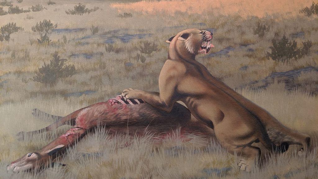 Un gato gigante de 400 kilos que cazaba bisontes vivió en América del Norte