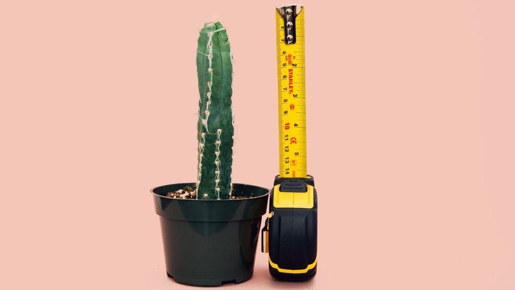 Hombres, estad tranquilos. Un estudio científico ha cambiado las medidas estándar para el pene. ¿Sabes si está en la media?