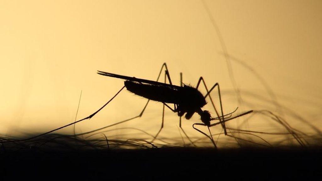 Liberan mosquitos modificados genéticamente en EEUU: esto es lo que quieren conseguir