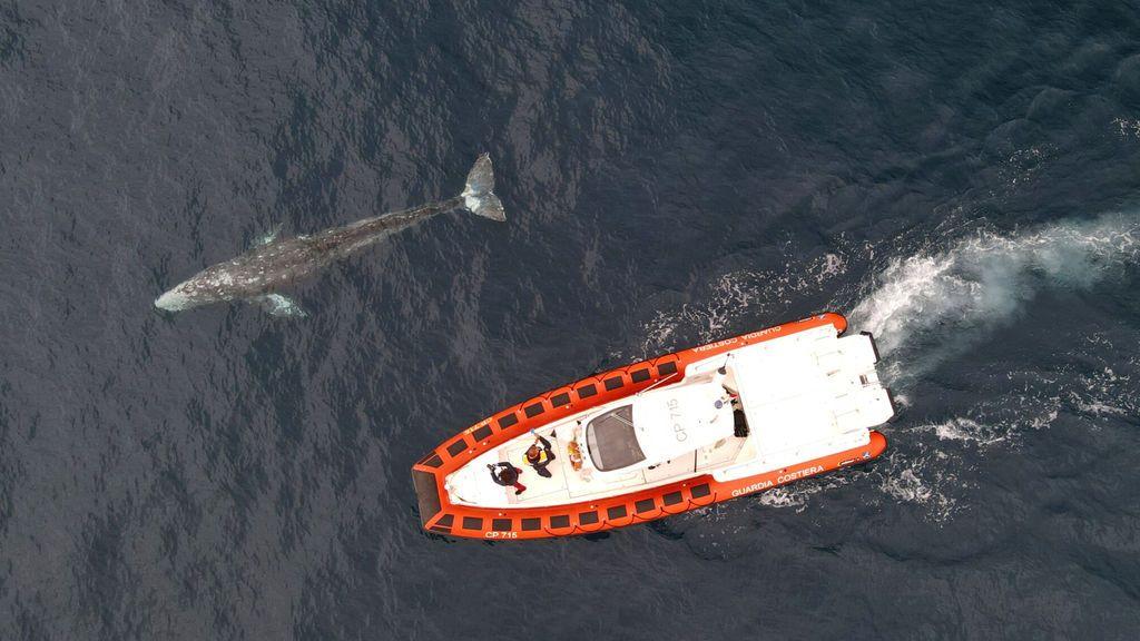 ¿Qué hace una ballena de Alaska en aguas italianas? Se resuelve el misterio en torno a 'Wally'