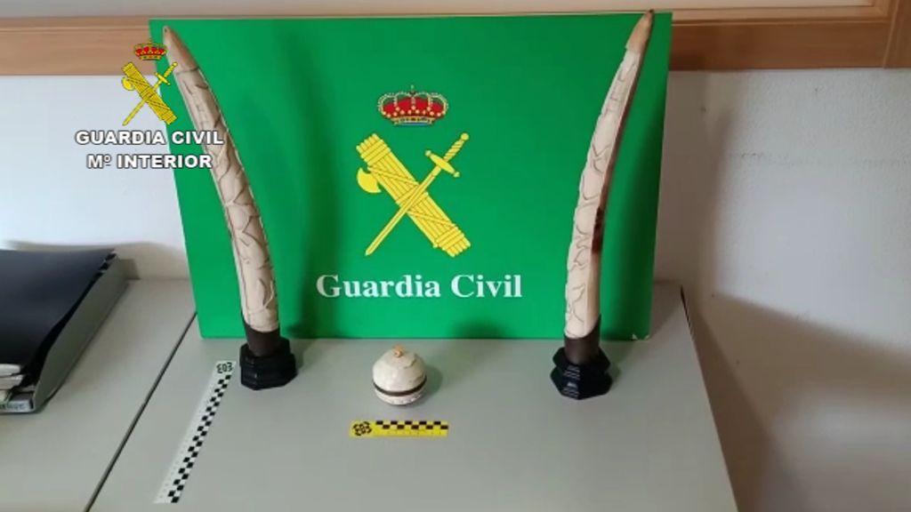 El Seprona incauta dos colmillos de elefante y un copón de marfil en Galicia