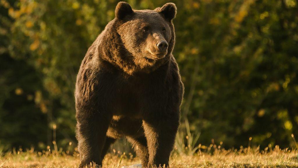 El príncipe de Liechtenstein, acusado de disparar al oso más grande de Rumania