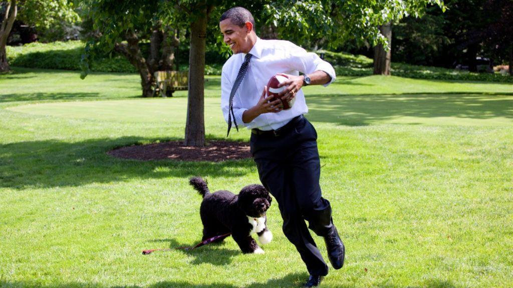 Muere Bo, el célebre perro de agua de Obama