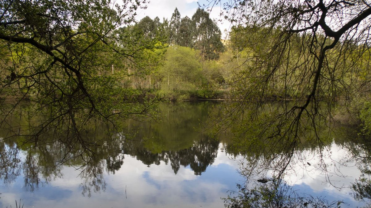 La superficie forestal de España ha crecido 2 millones de hectáreas en los últimos 20 años