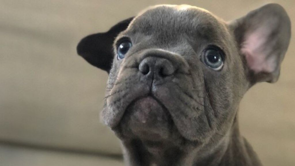 ok perro papu