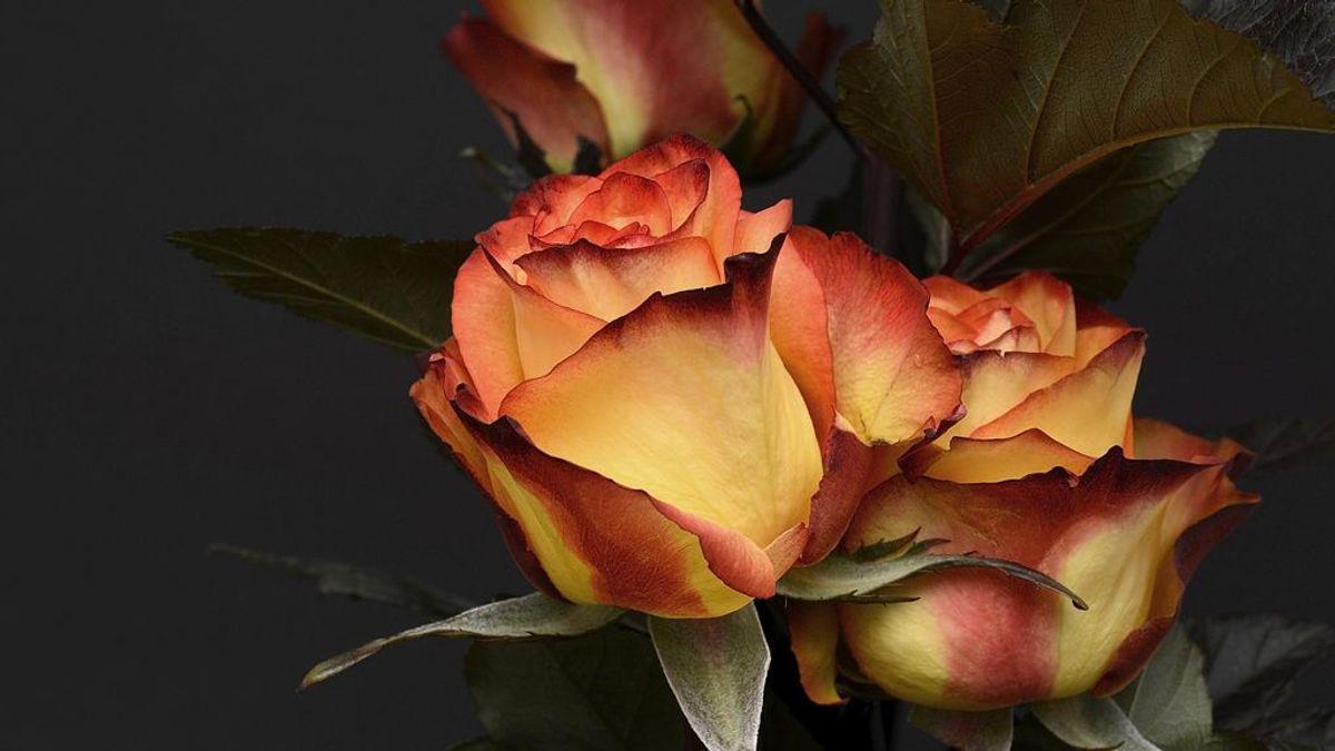 Cómo secar una rosa