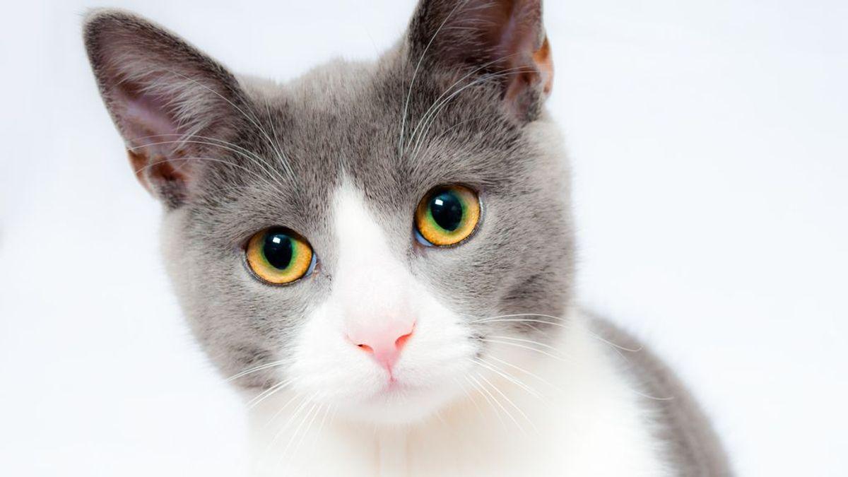 Cómo calcular la edad de mi gato en años humanos
